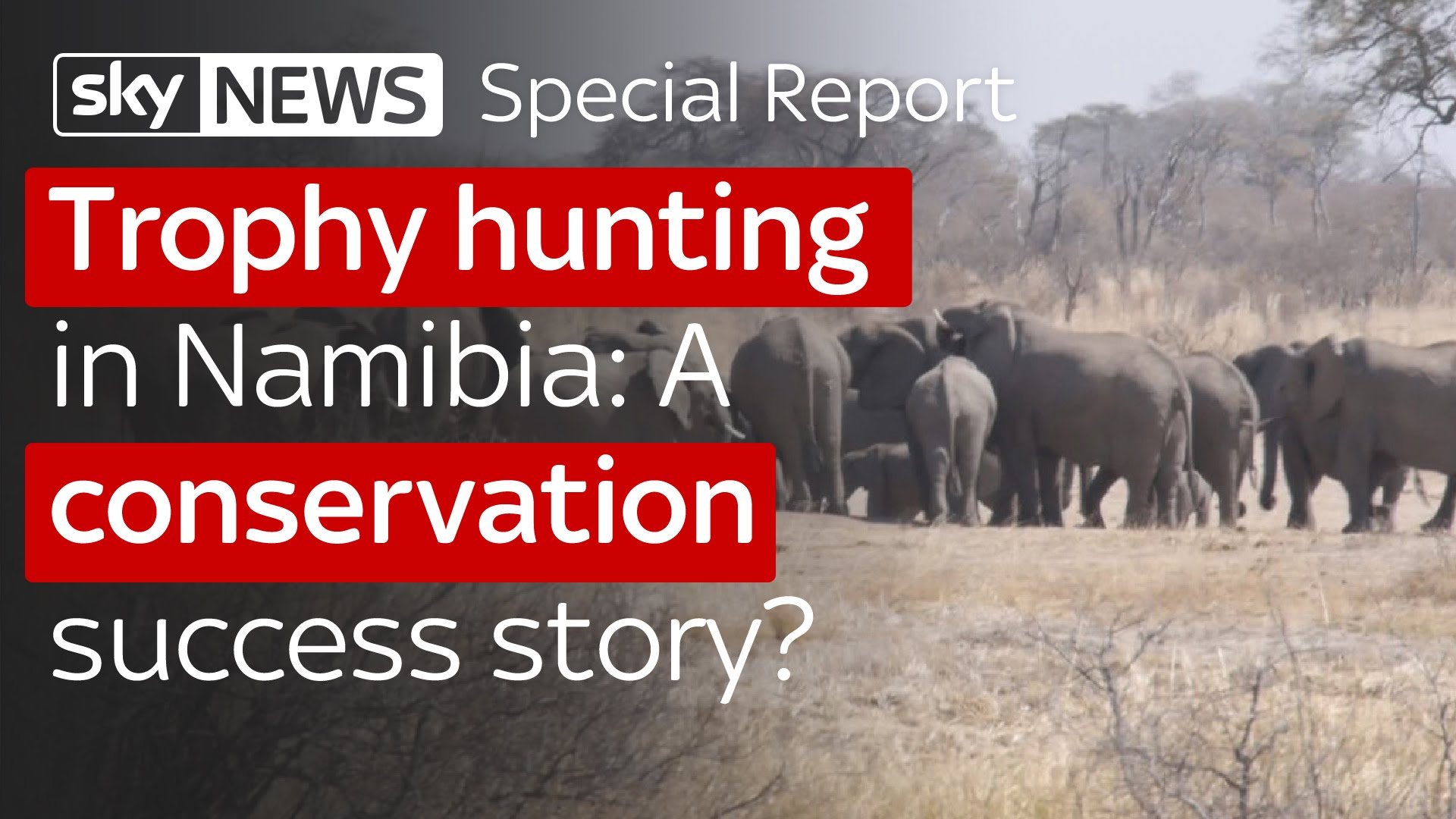 Trophy hunting in Namibia: A conservation success story? 13