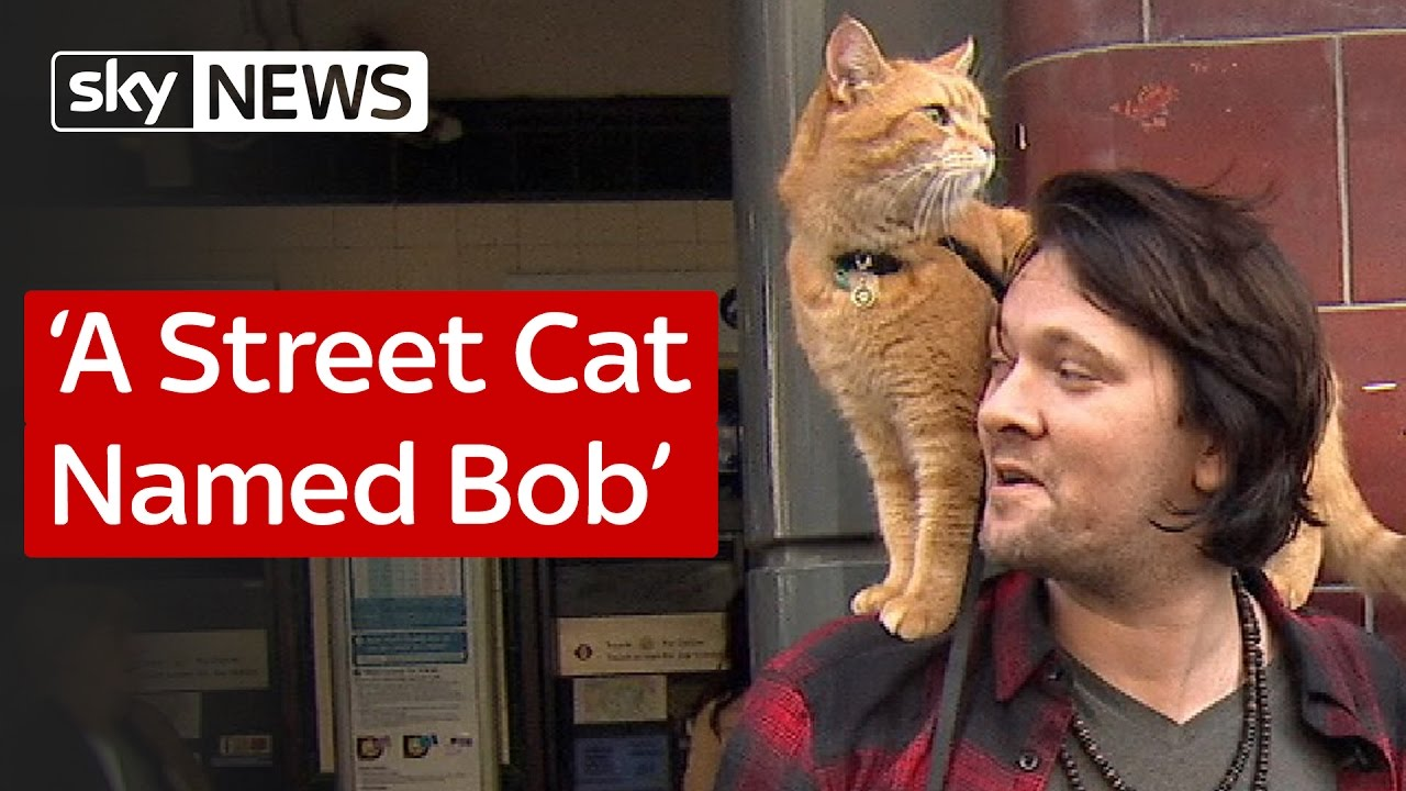 A Street Cat Named Bob 1
