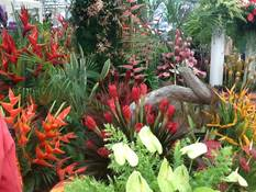 Pure Grenada Wins 13th GOLD MEDAL at RHS Chelsea Flower Show 3
