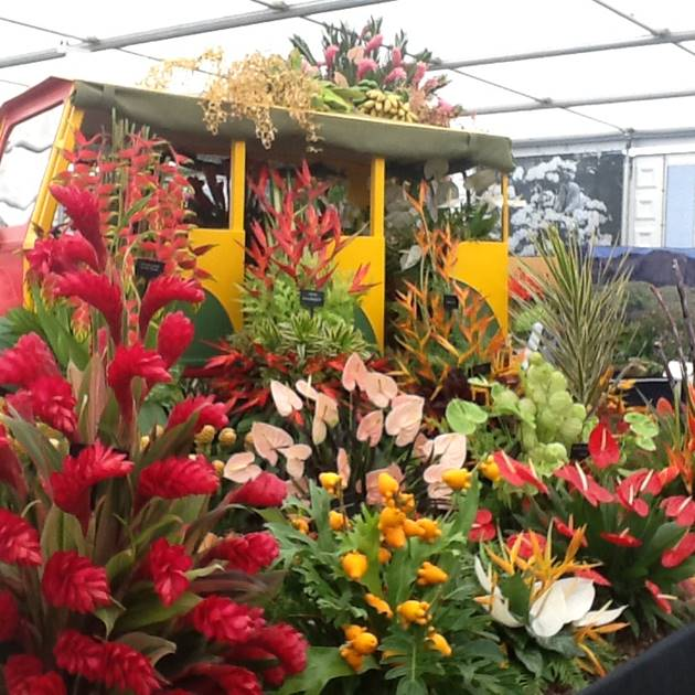 Grenada Wins 14th GOLD MEDAL at RHS Chelsea Flower Show 5