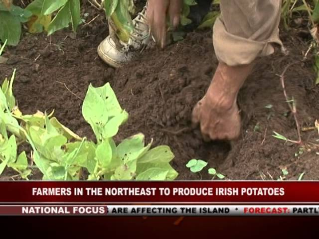 GIS Dominica Special Report, Farmers of the North-east Learn Potato Cultivation 1