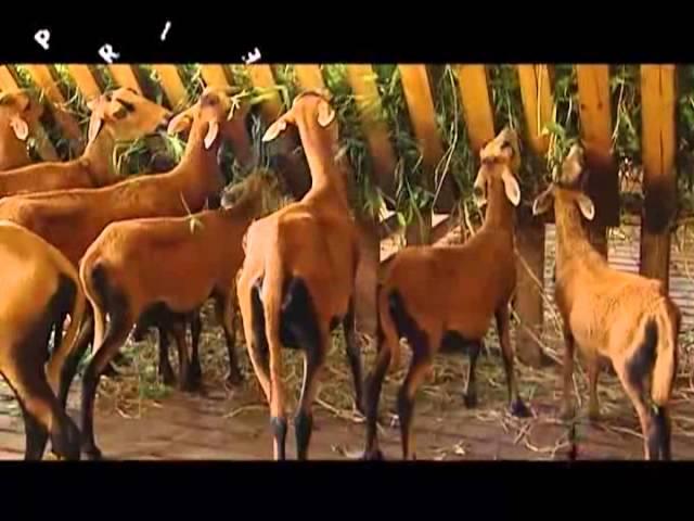 Profile: Livestock 8