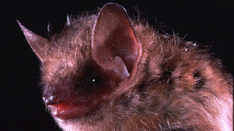 A 21-year-old man from B.C. dies after getting rabies from bat 1