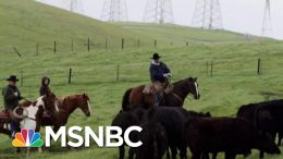 Farmers: Trump's Trade War Leaves Industry 'Worse, Not Better' | The Beat With Ari Melber | MSNBC 3