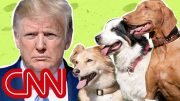 Why the Trump White House is puppy-less 3