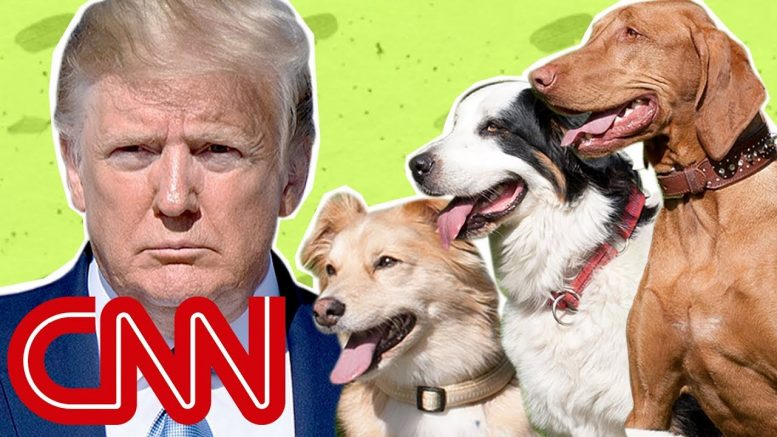 Why the Trump White House is puppy-less 1