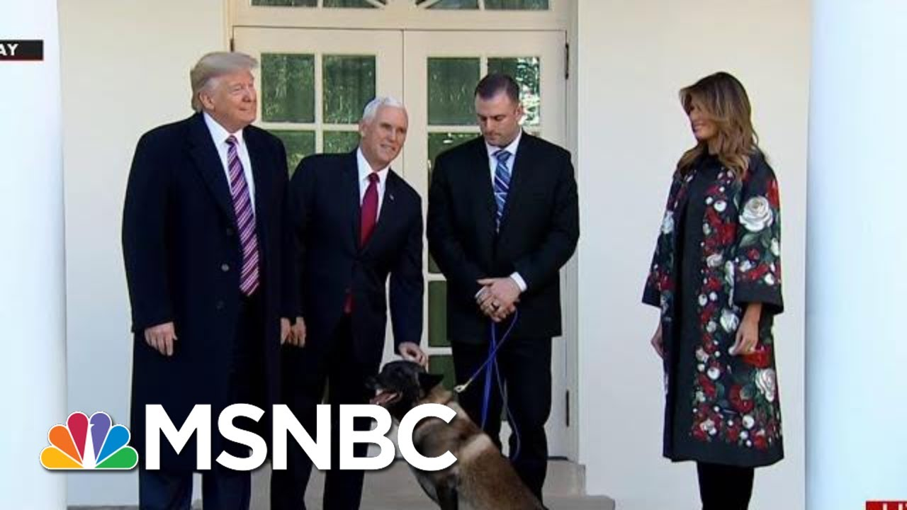White House: Conan Is A Good...Dog? | All In | MSNBC 4